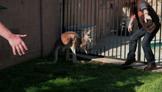 Carlito The Kangaroo
